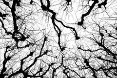 Cimes d'arbre Photographie stock libre de droits