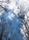 Cimes d'arbre d'arbres forestiers et ciel bleu nuageux Photos libres de droits
