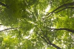 Cimes d'arbre atteignant le ciel Photographie stock libre de droits