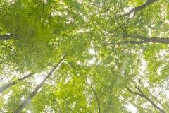Cimes d'arbre atteignant le ciel Image stock