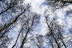 Cimes d'arbre avec un beau ciel Image stock