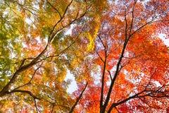 Cimes d'arbre colorées d'autunm Image stock