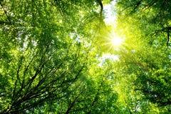 Cimes d'arbre colorées dans la forêt de chute avec le soleil brillant cependant des arbres Photo libre de droits