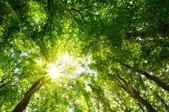 Cimes d'arbre colorées dans la forêt de chute avec le soleil brillant cependant des arbres Photographie stock libre de droits