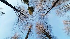 Cimes d'arbre contre le ciel bleu images libres de droits