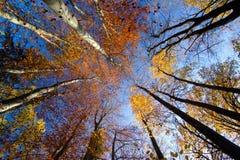 Cimes d'arbre d'automne Image libre de droits