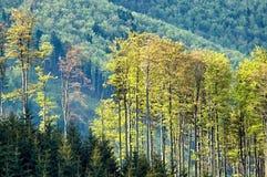 Cimes d'arbre d'un ressort Photos stock