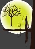 Cimes d'arbre dans le clair de lune Photographie stock