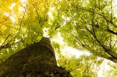 Cimes d'arbre de forêt photographie stock