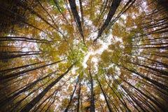 Cimes d'arbre de forêt d'automne Photos stock