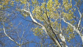 Cimes d'arbre en automne banque de vidéos