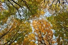 Cimes d'arbre en automne Image libre de droits