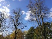 Cimes d'arbre en automne Photographie stock libre de droits