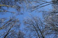Cimes d'arbre en hiver Photographie stock libre de droits
