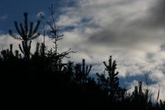 Cimes d'arbre et ciel en revanche Photographie stock libre de droits