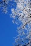 Cimes d'arbre givrées Photographie stock