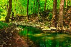 Cimes d'arbre vertes dans une crique de forêt Photographie stock