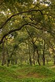 Cimetière de forêt de Confucius Photographie stock libre de droits