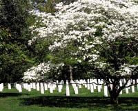 Cimetière national d'Arlington Image libre de droits