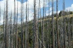 Cimitero degli alberi immagini stock libere da diritti