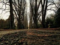 Cimitero del percorso della strada privata selvaggio Immagine Stock