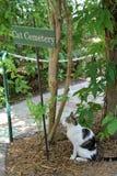 Cimitero dell'animale domestico fotografie stock libere da diritti