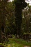 Cimitero di caduta di primo mattino Immagini Stock Libere da Diritti