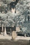Cimitero infrarosso con la pietra tombale in bianco Fotografie Stock Libere da Diritti