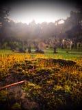 Cimitero muscoso Fotografia Stock