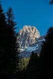 Cimon della Pala mt som inramas av träd, blå himmel, Dolomites, Italien Arkivbild