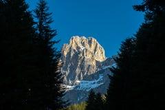 Cimon della Pala mt som inramas av träd, blå himmel, Dolomites, Italien Arkivfoto