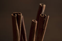 Cinamon sticks Stock Images
