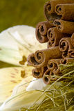 Cinamon sticks and flower Stock Photography