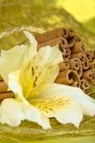 Cinamon sticks and flower Royalty Free Stock Image
