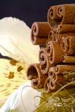 Cinamon sticks and flower Stock Photo