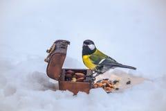 Cinciarella d'alimentazione mentre inverno nevoso immagini stock