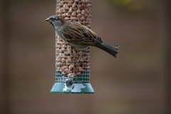 Uccello sull'alimentatore immagine stock libera da diritti
