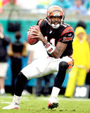 Cincinnati Bengals QB Akili Smith #11. Stock Photo