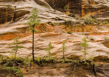 Cinco árboles fotos de archivo libres de regalías