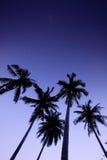 Cinco árvores de coco na praia Imagens de Stock