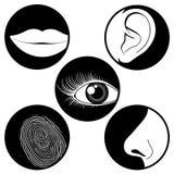 Cinco ícones dos sentidos Fotografia de Stock