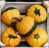 Cinco abóboras, a laranja e o verde coloriram, em uma caixa de madeira, para a venda Vista da parte superior Para Dia das Bruxas  foto de stock