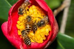 Cinco abejas que trabajan junto Foto de archivo libre de regalías
