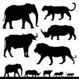 Cinco animais africanos grandes do safari Fotos de Stock