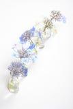 Cinco botellas de cristal con los flores azules Fotos de archivo