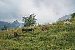 Cinco caballos salvajes en un campo verde fotografía de archivo