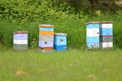 Cinco caixas coloridas da colmeia Fotos de Stock Royalty Free