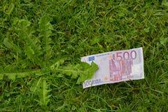 Cinco cem contas de dinheiro da cédula do Euro 500 na grama verde fresca Imagem de Stock Royalty Free