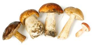Cinco cogumelos diferentes Imagens de Stock