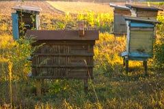 Cinco colmenas rurales en el entorno natural Imagen de archivo libre de regalías